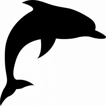 Falmatrica - delfin